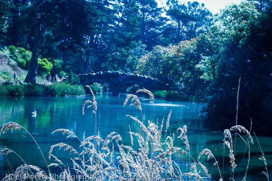 Do a walk around Stowe lake and climb up Strawberry Hill in Golden Gate Park
