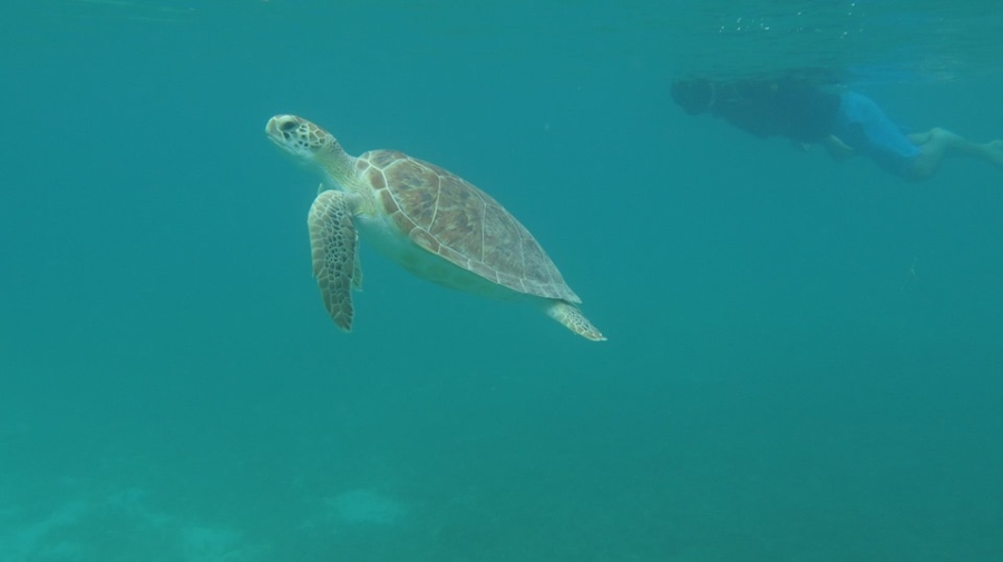 Go on a Diving/Snorkeling Excursion